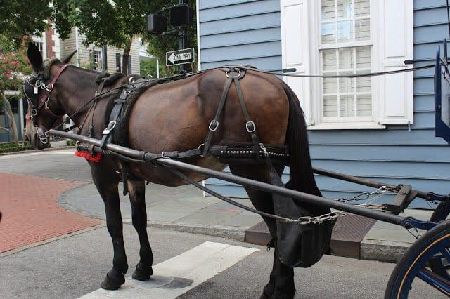 Charleston City Carriage Tour