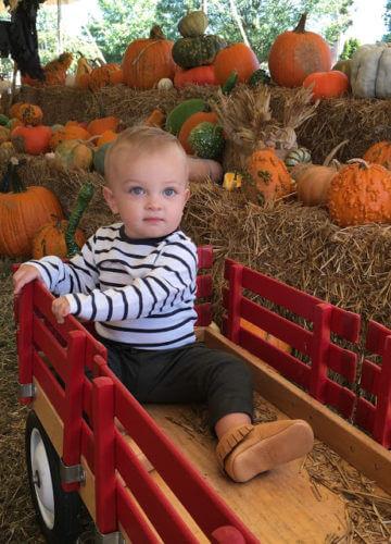 Pumpkins and Fall Favorites